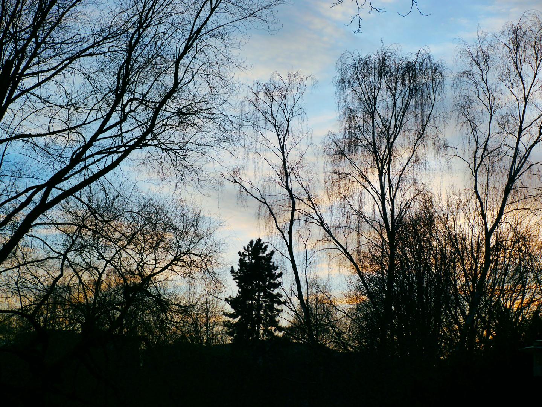 Ein Abend im Park