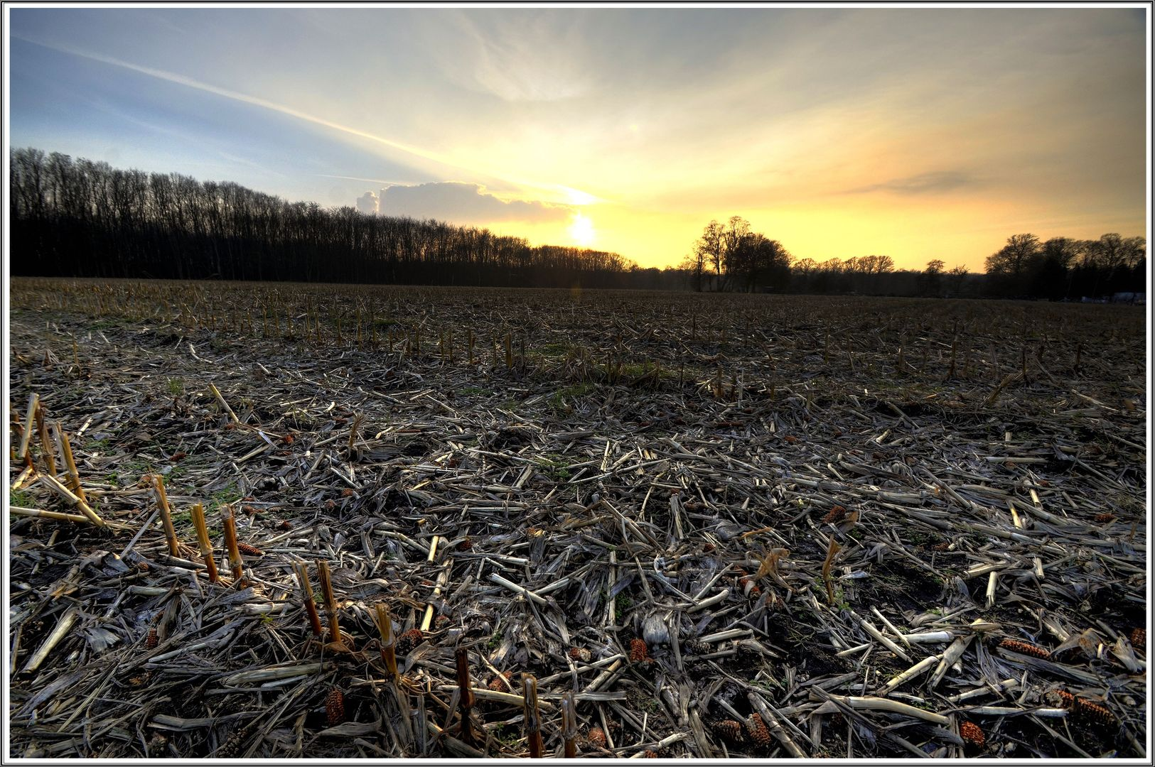 Ein abgedroschenes Maisfeld in der wintlerlichen Abendsonne