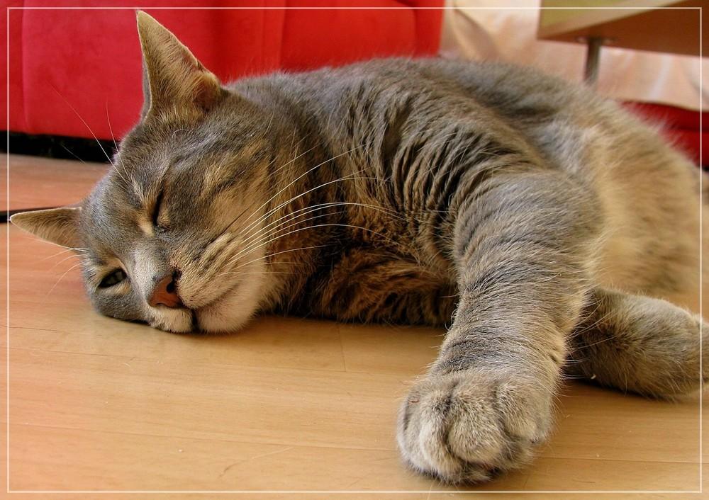 Ein Äuglein wach' ich - ein Äuglein schlaf' ich