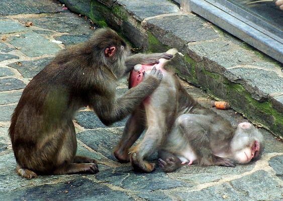 Ein Affe sieht rot...