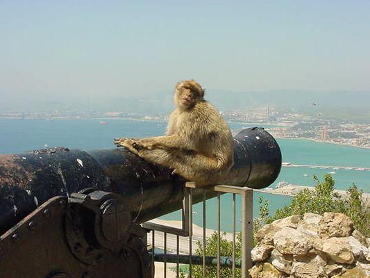 Ein Affe von Gibraltar