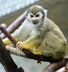 ein Affenkind