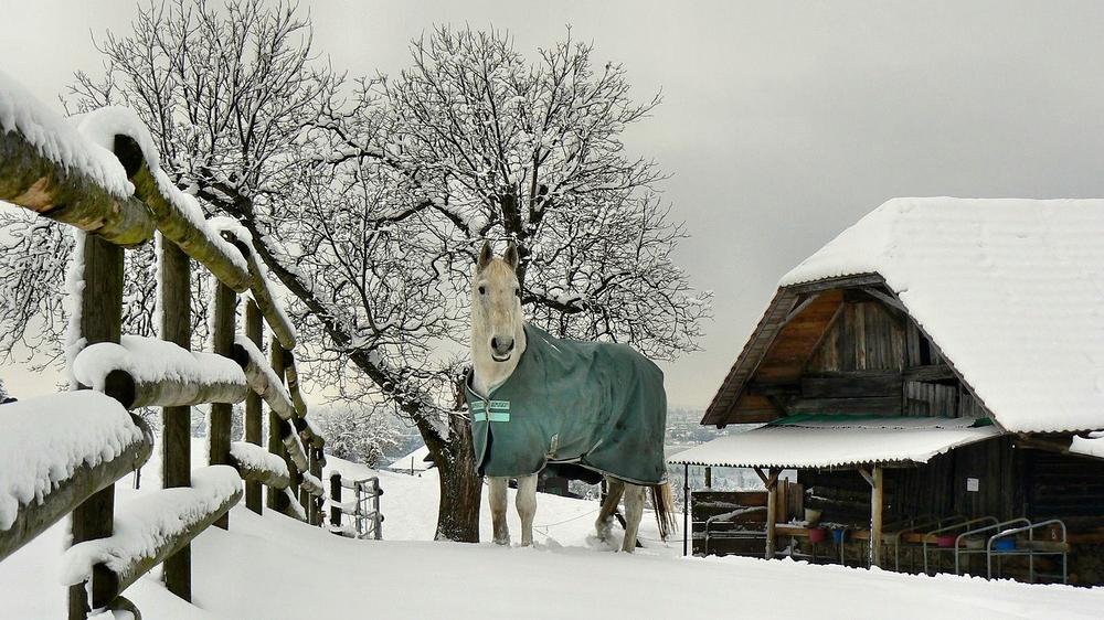 ein altes Pferd im Asyl