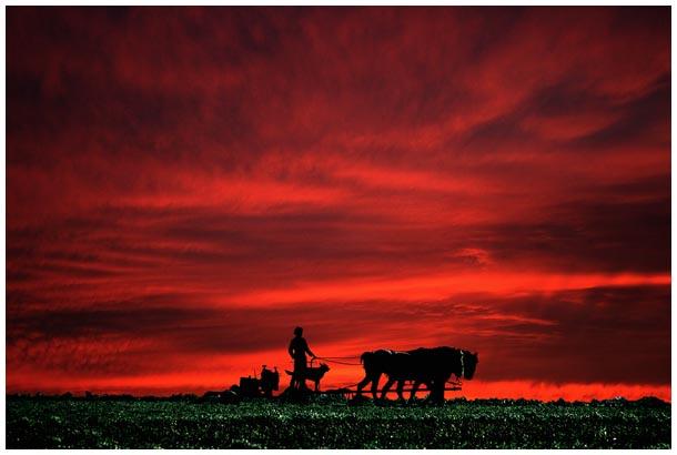 Ein Amish pflügt in Pennsylvania.