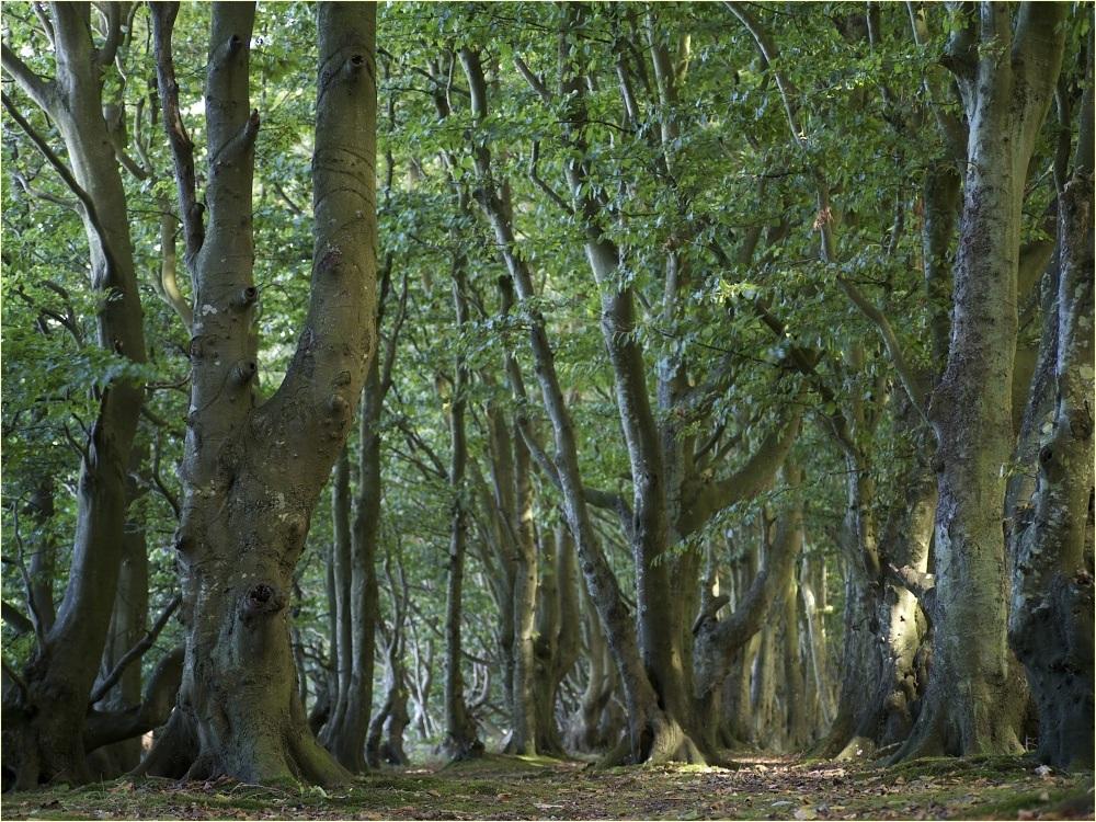 ein anderer Wald