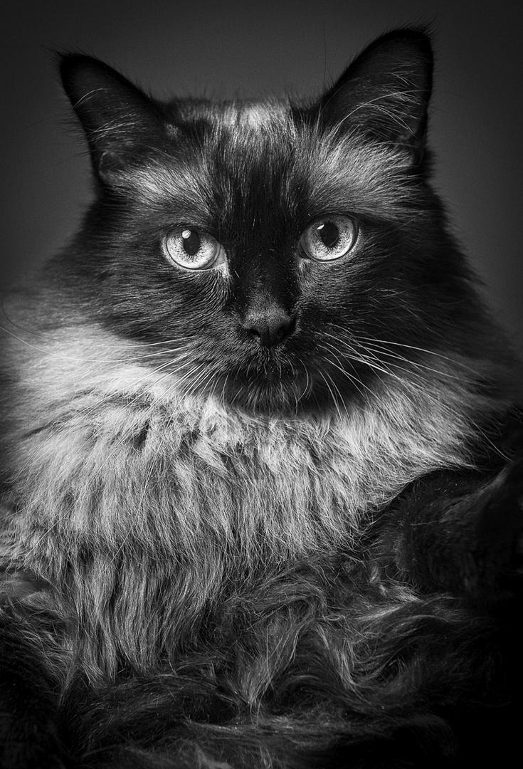 ein anderes portrait