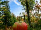 ein Apfel macht eine Reise ;)