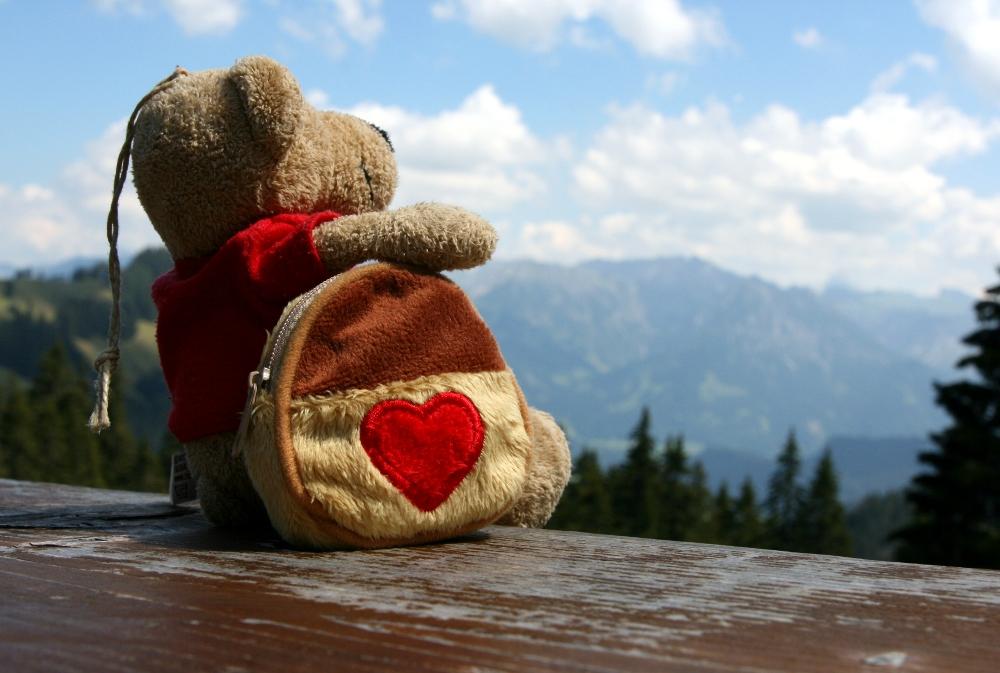 Ein Bär auf Wanderschaft...