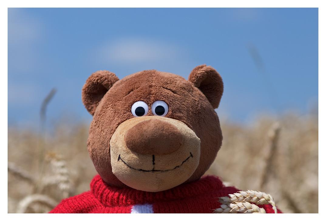 .: Ein Bär im Kornfeld :.