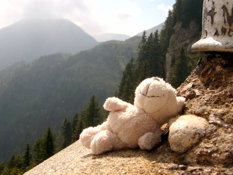 Ein Bär läßt es sich in den Dolomiten die Sonne auf den Bauch brennen
