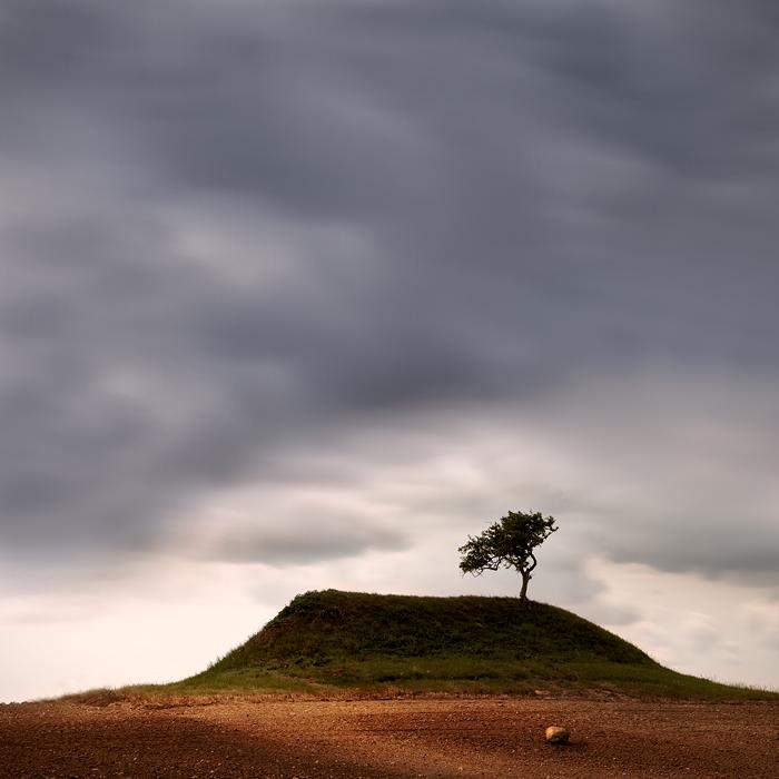 ... ein Baum ...