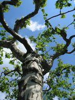 ein Baum....