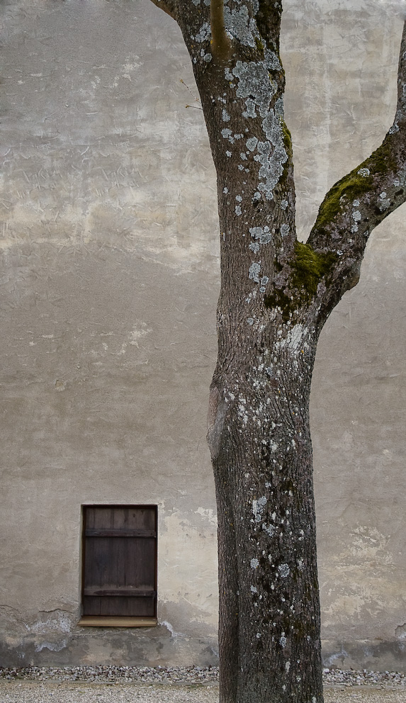 ein Baum