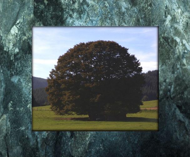 Ein Baum aus Wittgenstein