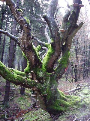 Ein Baum :-)