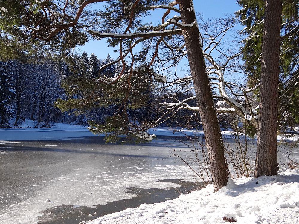 Ein Baum des Sees