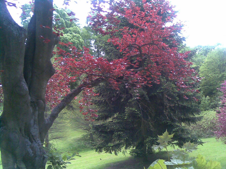 ein Baum, ein Ast, Natur pur