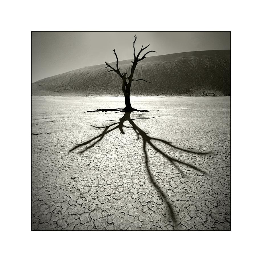 Ein Baum - Ein Licht - Ein Schatten Foto & Bild ...