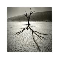 Ein Baum - Ein Licht - Ein Schatten