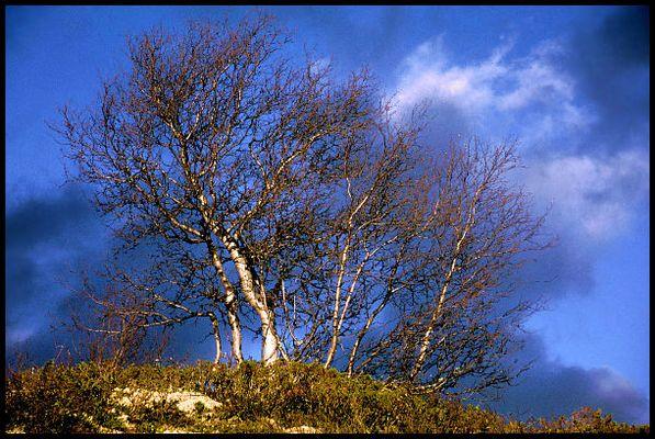 Ein Baum ... ein paar Wolken ...