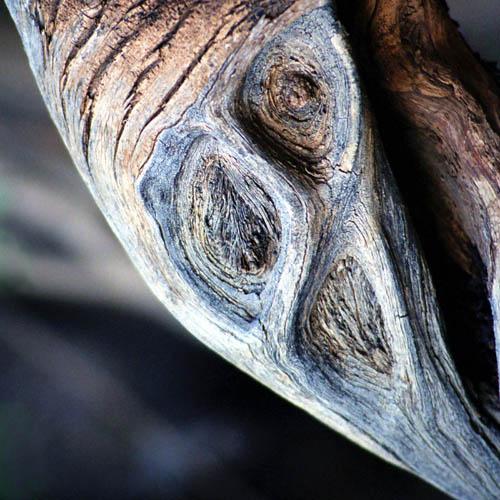Ein Baum, ein Schrei
