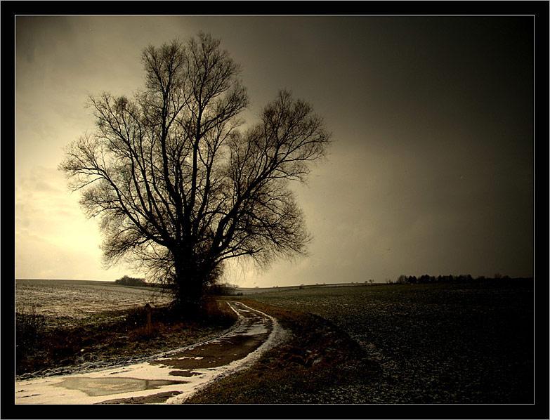 Ein Baum - ein Weg