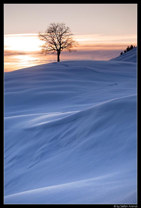 Ein Baum II