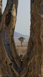 Ein Baum im Baum