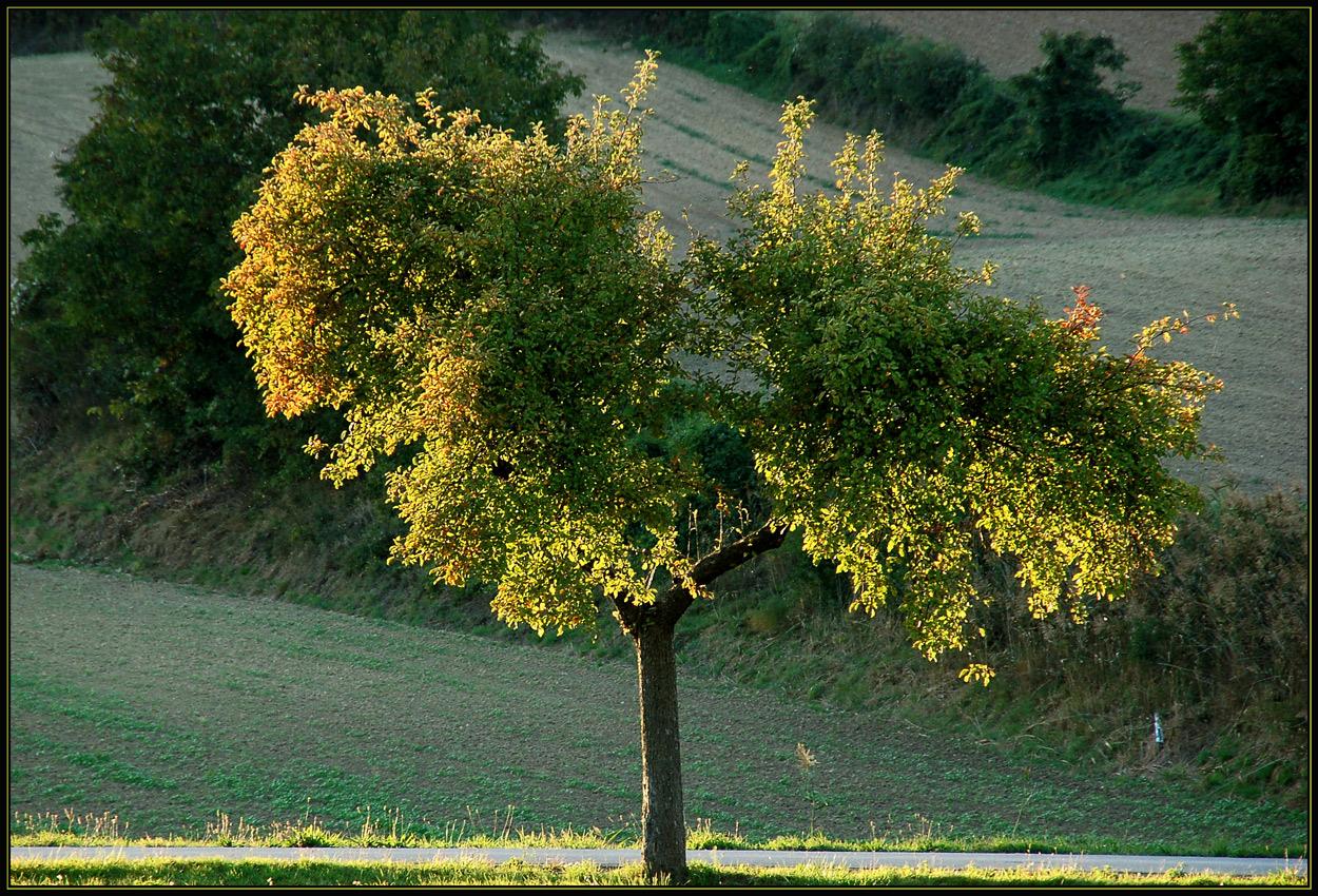 Ein Baum im Herbst