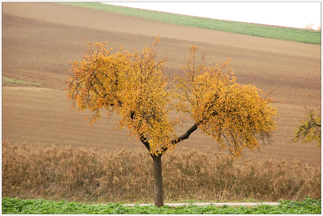 Ein Baum im Herbst - vier Wochen später