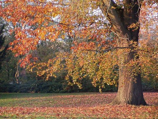 Ein Baum im Kleide des Herbstes