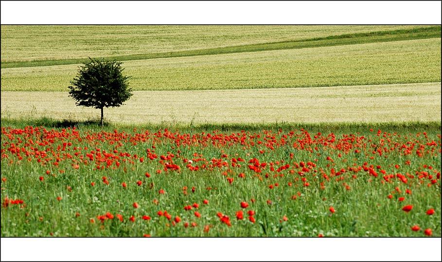 Ein Baum im Kornfeld, zwischen Blumen und Gras...
