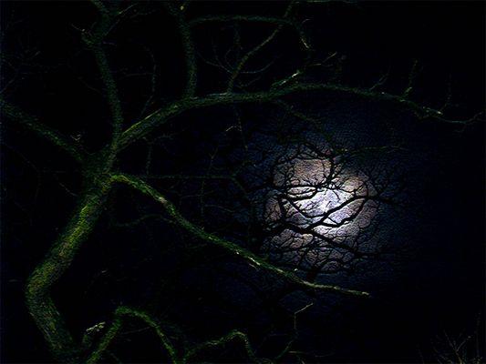 Ein Baum im Mondlicht