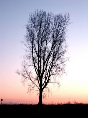 Ein Baum im Morgenlicht