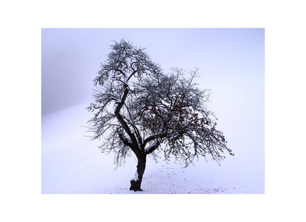 Ein Baum im Nebel und Schnee