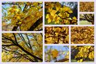 Ein Baum im November...