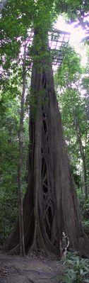 ein Baum im Regenwald