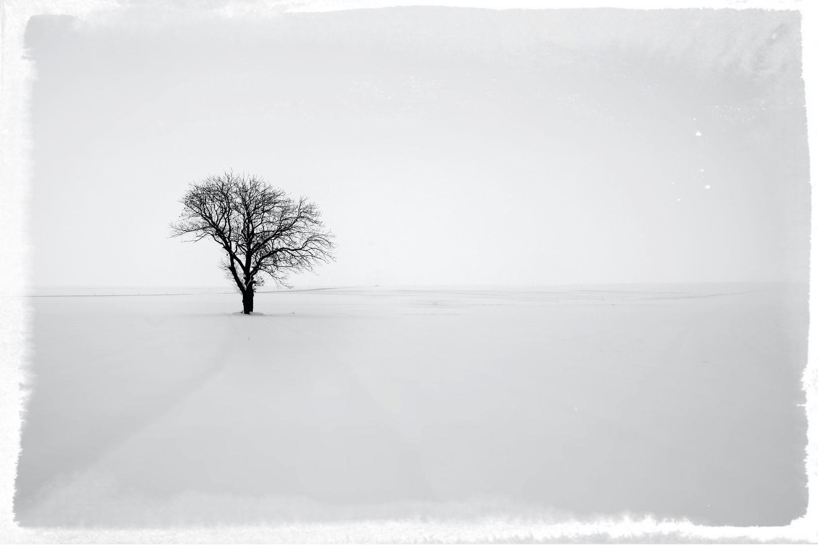 Ein Baum im Schnee