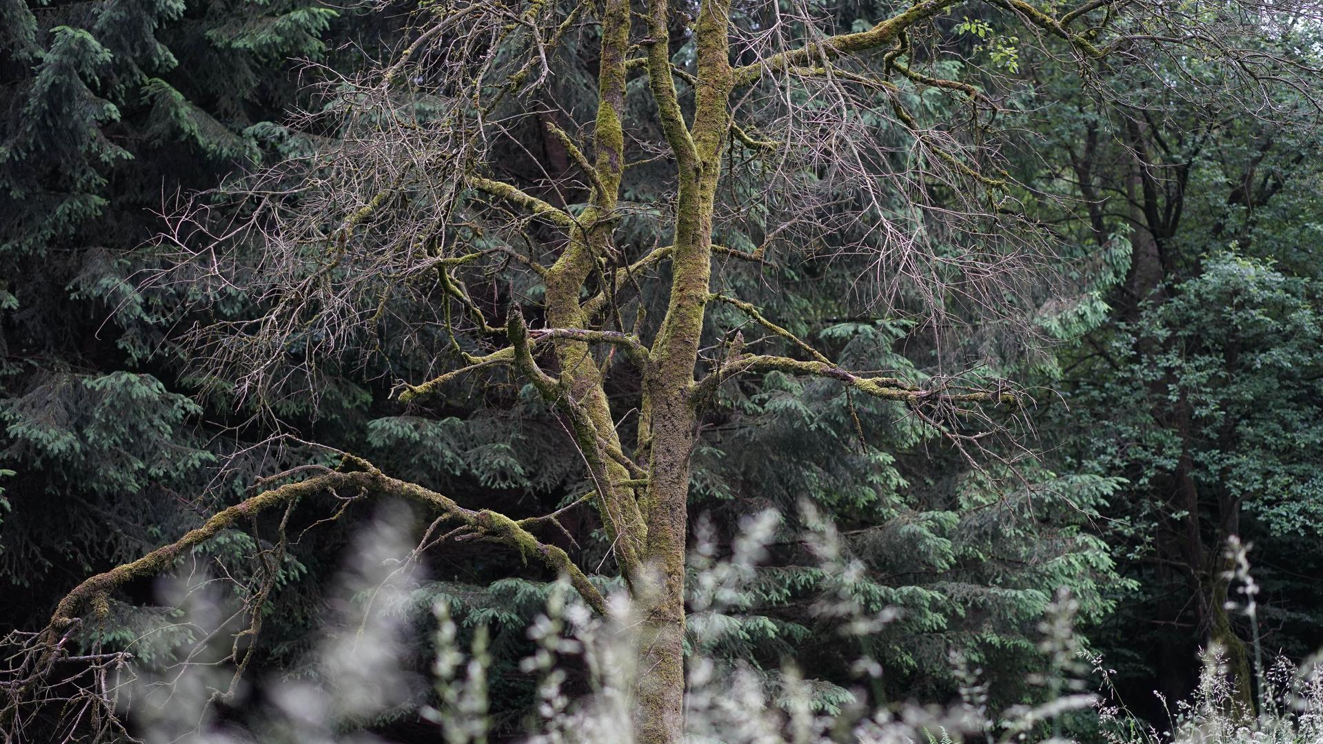 Ein Baum im Solling