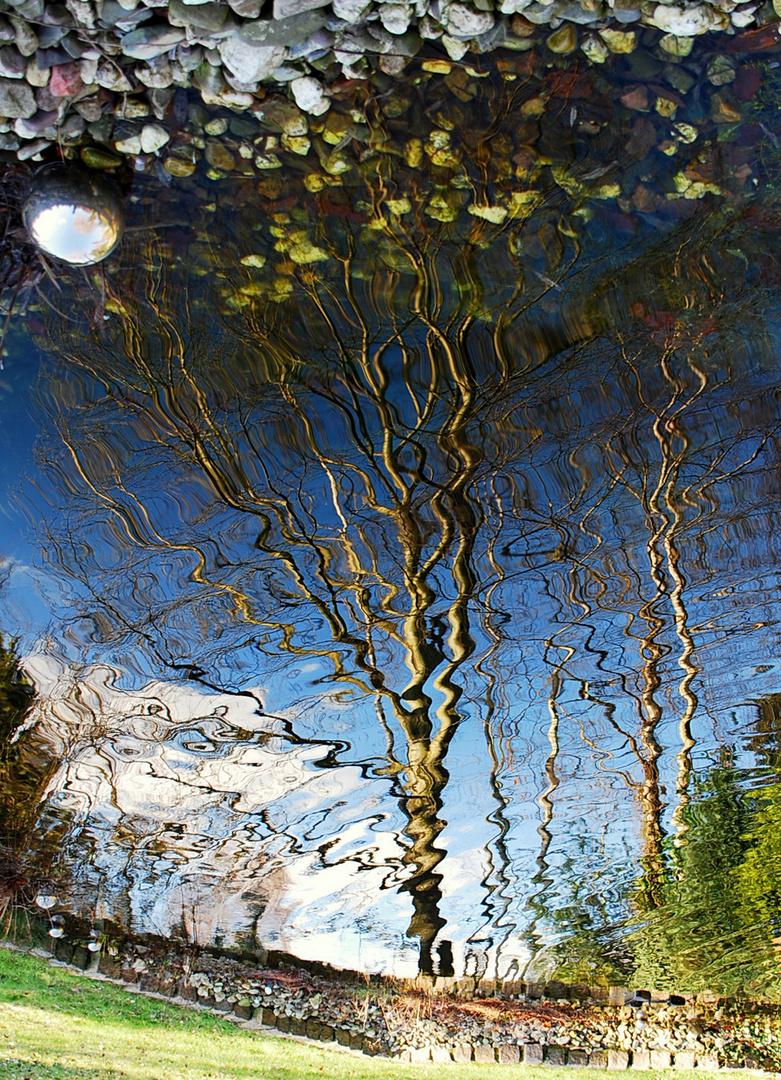 Ein Baum im Wasser!