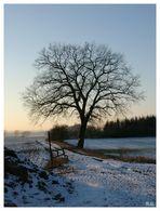Ein Baum im Winter