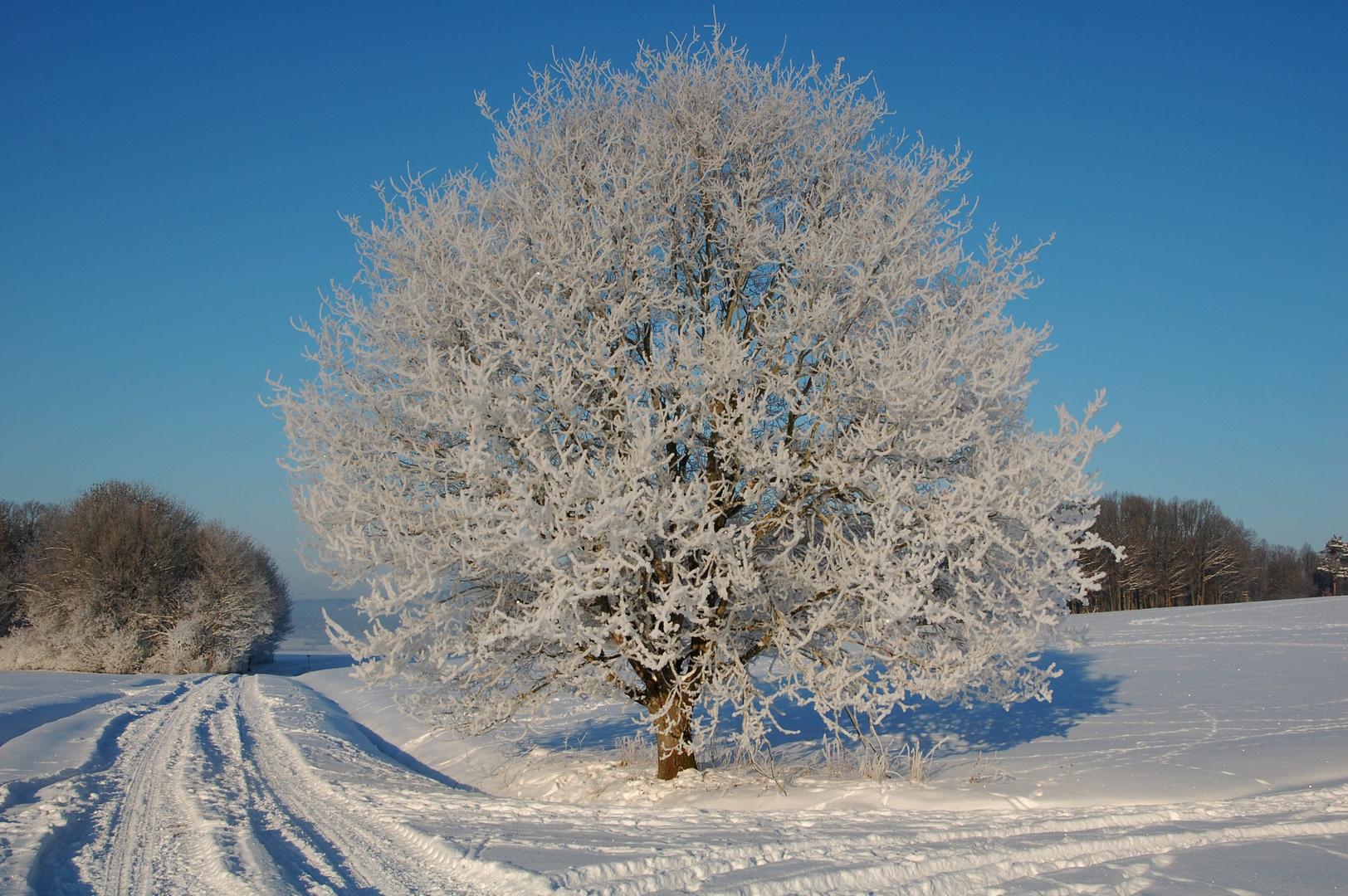 Ein Baum im Wintermantel