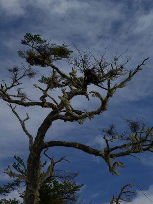 Ein Baum in Patagonien