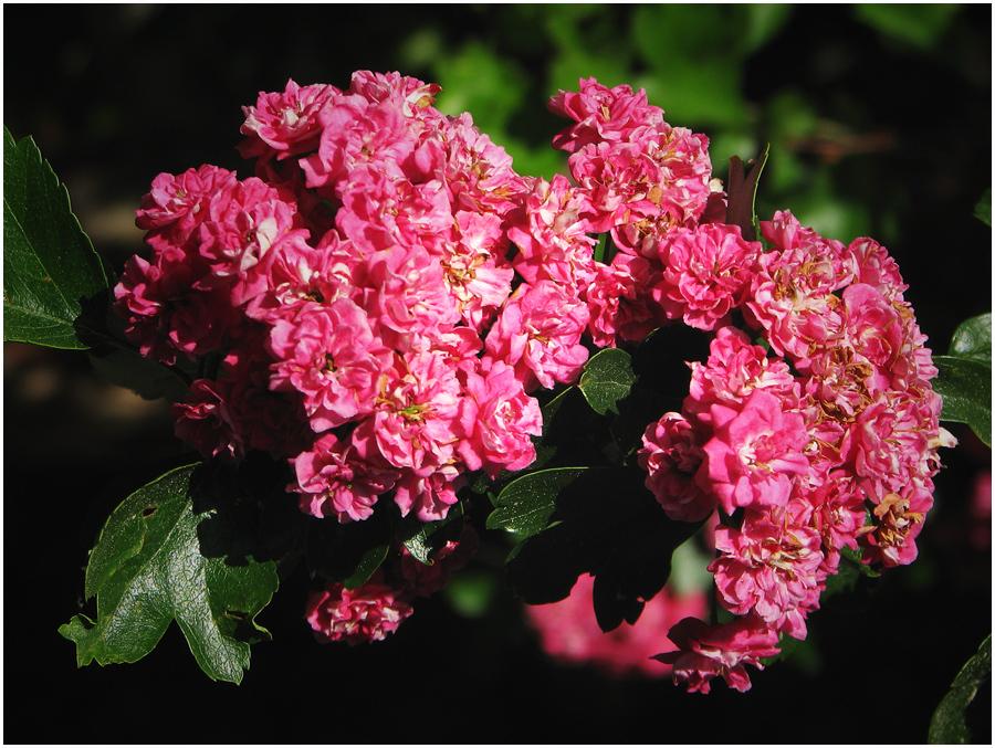 Ein Baum in voller Blüte