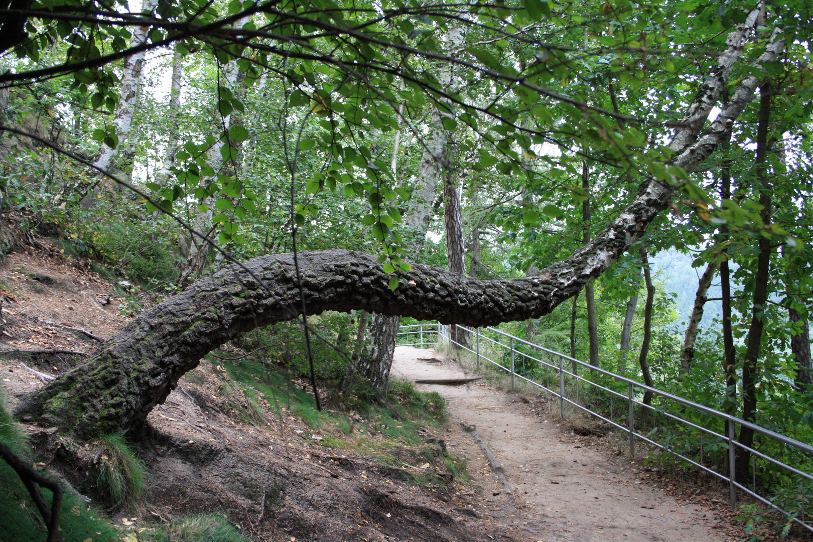 Ein Baum mal anders