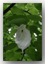Ein Baum mit besonderen Blüten