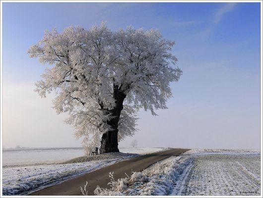 Ein Baum , mit etwas Raureif , an einem Weg