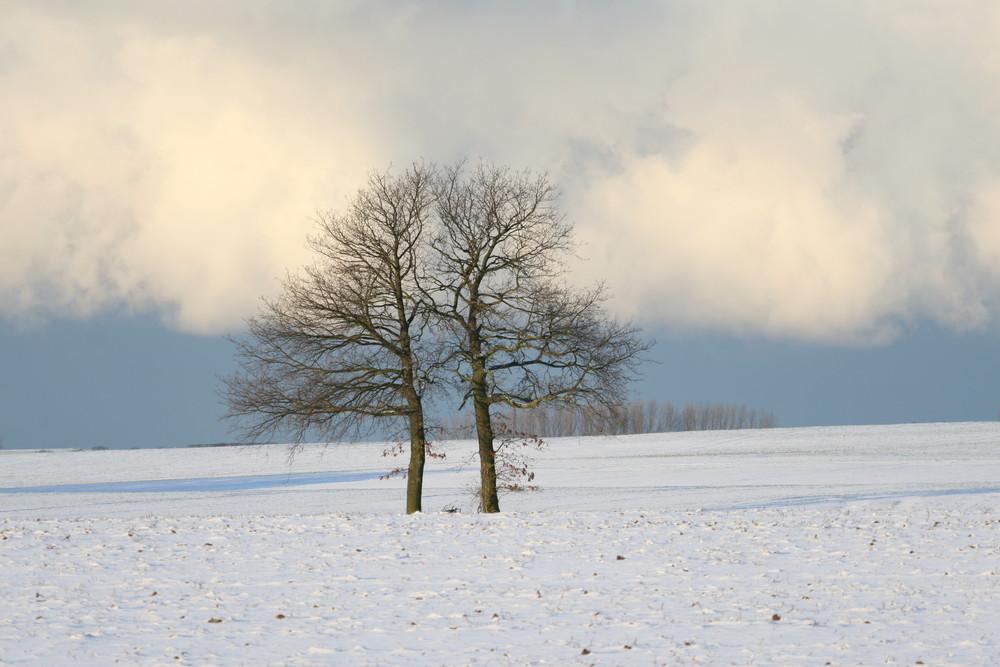 ein Baum oder doch zwei ?
