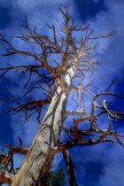 Ein Baum schmückt sich