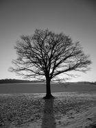 Ein Baum steht im Felde